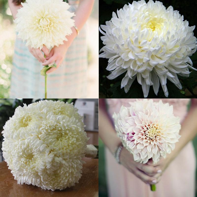 Темными тюльпанами свадебный букеты из лилий и хризантем цветов цены свадебные